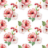 Hibiscus4 Royalty Free Stock Images