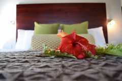 Hibiscus Bed Royalty Free Stock Photography