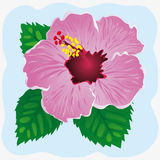Hibiscus on a blue background. Vector illustration. Hibiscus on a blue background with leaves. Vector illustration Stock Illustration