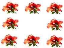 Hibiscus border Stock Photo