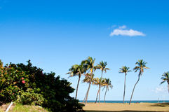 Hibiscus bush and palm trees on the beach Royalty Free Stock Images