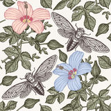 Hibiscus cicadas. Flowers mallow insects fauna. Seamless textile background. Drawing engraving. Freehand isolated realistic. Hibiscus cicadas. Flowers mallow Royalty Free Stock Photography