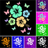 Hibiscus colored pattern Stock Photos