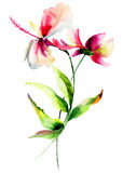 Hibiscus with Cosmea flowers. Watercolor illustration Royalty Free Stock Photography