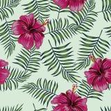 Hibiscus de Borgonha no fundo sem emenda das folhas foto de stock royalty free