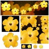 Hibiscus design Stock Photography