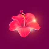 Hibiscus. Design created in Adobe Illustrator Royalty Free Stock Image