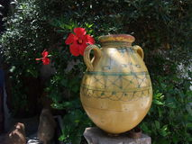 Hibiscus e vaso histórico Imagem de Stock