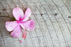 Hibiscus em de madeira Imagem de Stock