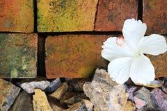 Hibiscus em telhas da argila Imagens de Stock