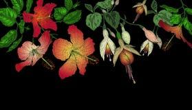 Hibiscus en fuchsiakleurig bloemenachtergrond Royalty-vrije Stock Foto