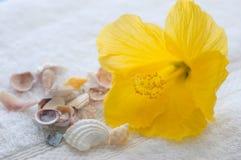 Hibiscus en zeeschelpen Stock Fotografie