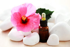 Hibiscus essential oil royalty free stock photo