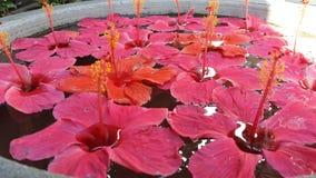 Hibiscus  floral arrangement Stock Images