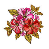 Hibiscus floral bouquet Royalty Free Stock Images