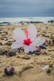 Hibiscus flower on the beach Stock Images