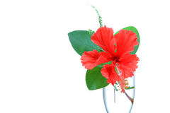 Hibiscus flower beauty Stock Photos