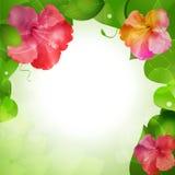 Hibiscus flower border background Stock Photo