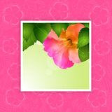 Hibiscus flower border on pink Stock Photo