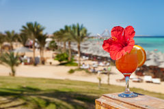 Hibiscus flower on cocktail in tropical resort Stock Photo