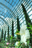 Hibiscus, Flower Dome, Gardens by the Bay Royalty Free Stock Images