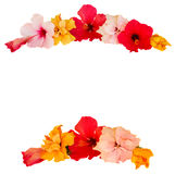 Hibiscus flower frame Stock Images