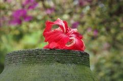 Hibiscus flower. At garden Stock Photo