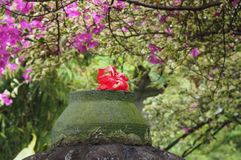 Hibiscus flower. At garden Stock Photos