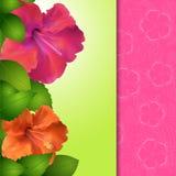 Hibiscus Flower Panel Border Stock Photos
