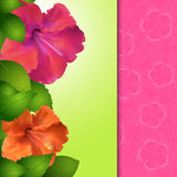 Hibiscus flower panel border Stock Photos
