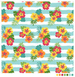 Hibiscus flower seamless patterm. Summer seamless  pattern with hibiscus flower Stock Photo