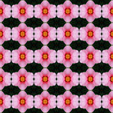 Hibiscus flower seamless. Pink hibiscus flower in full bloom seamless use as pattern and wallpaper vector illustration