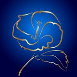 Hibiscus flower sketch gold on blue Stock Image