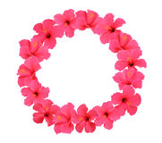 Hibiscus flower wreath isolated on white background Stock Image