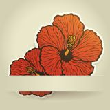 Hibiscus flowers Royalty Free Stock Photos