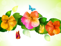 Hibiscus Flowers And Butterflies Stock Photography