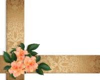 Hibiscus Flowers Border elegant Royalty Free Stock Image