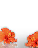 Hibiscus Flowers Border Tropical  Stock Photos
