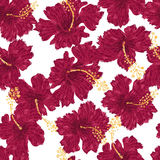 Hibiscus flowers endless ornament Stock Image