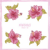 Hibiscus flowers hand drawn  set Stock Images