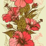 Hibiscus flowers seamless border Royalty Free Stock Image