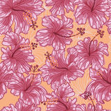Hibiscus flowers seamless pattern Stock Photography