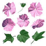 Hibiscus flowers set. Elegant decorative hibiscus flowers and leaves, design elements. Floral decorations for invitations, greeting cards, banners. Tropical Royalty Free Stock Image