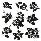 Hibiscus flowers set vector illustration