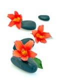 Hibiscus flowers on spa stones. Colorful orange hibiscus flowers on black spa stones; isolated on white background Stock Photo