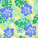 Hibiscus flowers 002. Tropical flowers seamless pattern vector Stock Photography