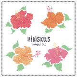 Hibiscus flowers vector set Royalty Free Stock Photos