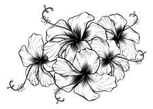 Hibiscus Flowers Vintage Retro Style Woodcut Engraved Etching. Hibiscus flowers in a vintage retro woodcut engraved etching style Stock Images