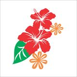 HIBISCUS FLOWERS. FOR YOU DESIGN Stock Photos