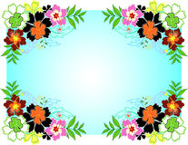 Hibiscus Frame Stock Images
